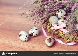 Spring composition, nest with eggs near the bunch of heather ...