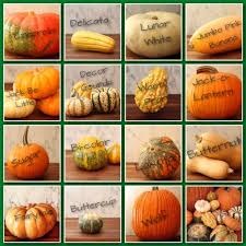 Pumpkin Varieties Chart Awesome Chart Showing Different Gourd Pumpkin And Squash