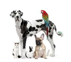 Science Animal Science
