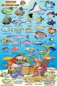 Mexican Caribbean Reef Creatures Guide Waterproof Fish Card