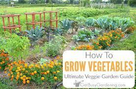 growing vegetables the ultimate veggie