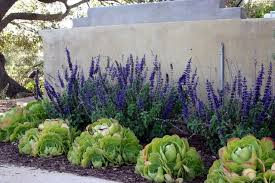 Small Picture contemporary western water wise landscaping Google Search