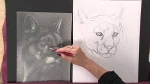 Cool Animal Eye Drawings Cute Jam Pencil And Easy Made Up