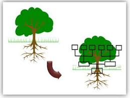 tree in powerpoint 5 creative powerpoint tree diagrams