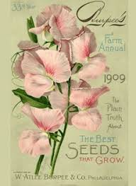 garden seed catalogs. Nursery And Seed Catalog Image Gallery | Special Collections Garden Catalogs V