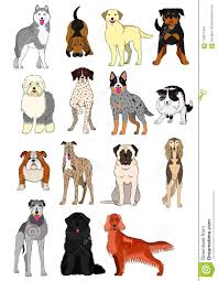 Group Of Large And Middle Dogs Breeds Hand Drawn Chart Stock