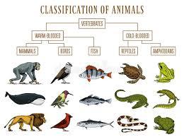 Whale Classification Chart Classification Of Animals Reptiles Amphibians Mammals Birds