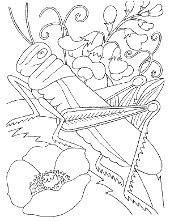 We've got it all under control. Insects Bugs Coloring Pages Topcoloringpages