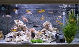 Image result for Do vegetarians eat fish