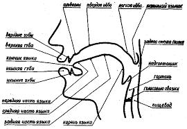 Реферат Нарушения речи и их физиологические и психологические  Нарушения речи и их физиологические и психологические причины