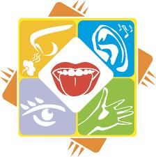 five senses facts science trek idaho public television  five senses facts