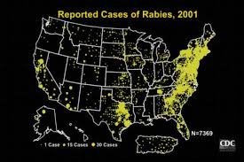 can rabies be cured in humans medical information and advice can rabies be cured in humans