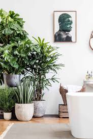 Indoor house trees in the bathroom