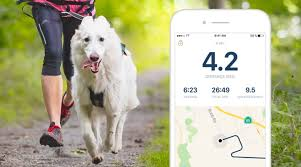rundogo first tracking app for all types of dog sports