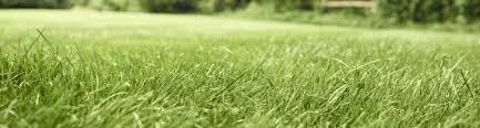 tall green grass field. Pdp Hero Grass Field Scotts Tall Green N