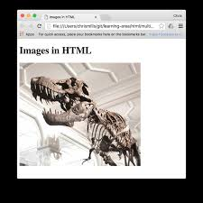 Images in HTML - Learn web development | MDN