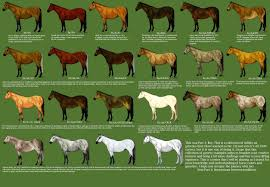 Foal Color Chart Quarter Horse Coloring Mayhemcolor Co
