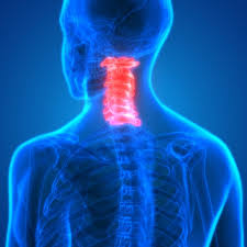 The muscle anatomy of the head and neck is a fascinating area, with the the neck also containing the 7 vertebrae of the part of the spine called the cervical curve. The Cervical Spine Anatomy Function And Common Spine Surgery San Antonio Seguin New Braunfels