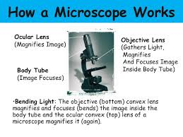 Parts Of The Microscope Parts Of The Microscope And Their Functions