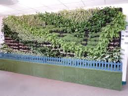 informal green wall indoors. Below: Left; The Hadlow Living Wall Inside And Right; Lighting Units Which Operate Circa 12 Hours On Off Informal Green Indoors N