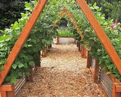 raised bed with trellis family food garden