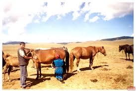 Сельское хозяйство Информационный портал о Кыргызстане новости  Категория Сельское хозяйство