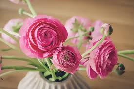 Pink Rose Wallpaper Iphone