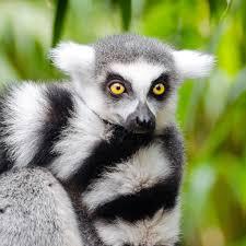 live jungle animals. Interesting Live Jungle Animals Live Wallpapers Throughout Live Jungle Animals A
