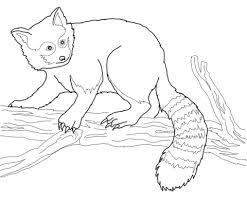 Rode Panda In De Boom Kleurplaat Gratis Kleurplaten Printen