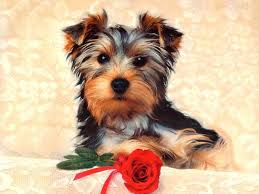 wallpapers backgrounds cute dogs pets wallpapers s puppies labels puter