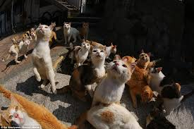 hundreds of cats. Beautiful Cats The Incredible Pictures Taken By Photographer Kei Nomiyama Show Hundreds Of  Cats Prowling The Island And Hundreds Of Cats O