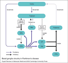 What Is The Pathophysiology Of Parkinsons Disease Quora