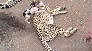 symbiotic relationships symbiotic relationship between animal species is interesting youtube