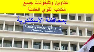 عناوين وأرقام تليفونات جميع مكاتب القوي العاملة بالاسكندرية