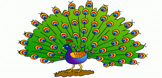 Small Picture Peacock Coloring Pages