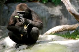 PHOTOS  The San Diego Zoo Susan Shain