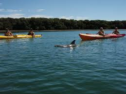 gift voucher dolphin sanctuary ships graveyard self guided tour 2 person kayak