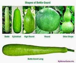 Gourd Identification Chart How To Grow And Care For Bottle Gourd