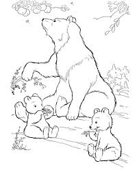 Small Picture 137 best Coloring Bears images on Pinterest Drawings Adult