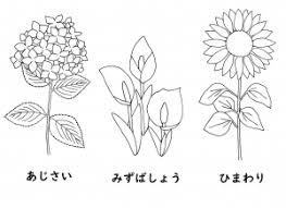 暮らし探訪 ぬり絵 夏の花
