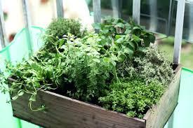 apartment herb garden. Apartment Herb Garden Indoor Gardening Basics Diy