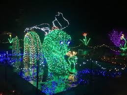 garden of lights a seasonal beacon in the woods