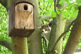 Katzen Und Vögel Tipps Für Garten Und Katzenbesitzer Lbv