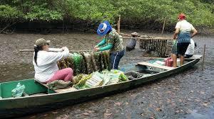Resultado de imagem para e Ostreicultores de Canguaretama - AOCA