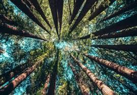 Legal Logging Dha
