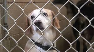 animal shelters sad. Brilliant Sad Intended Animal Shelters Sad
