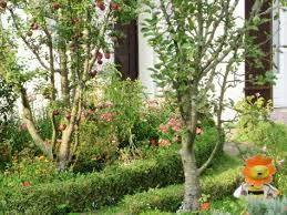 Orangetreeunderplanting  Lush Landscapes For Tough ClimatesUnderplanting Fruit Trees