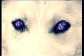 galaxy tumblr hipster wolf. Plain Wolf Wolf Galaxy And Eyes Image To Galaxy Tumblr Hipster Wolf Y