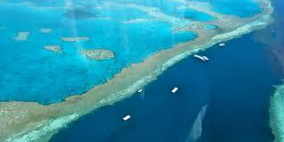 Резултат слика за корални гребен слике
