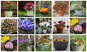 container gardening for beginners. Container Gardening For Beginners I